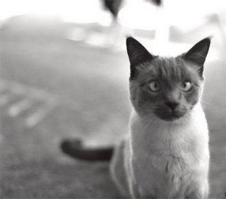 cross-eyed-cat